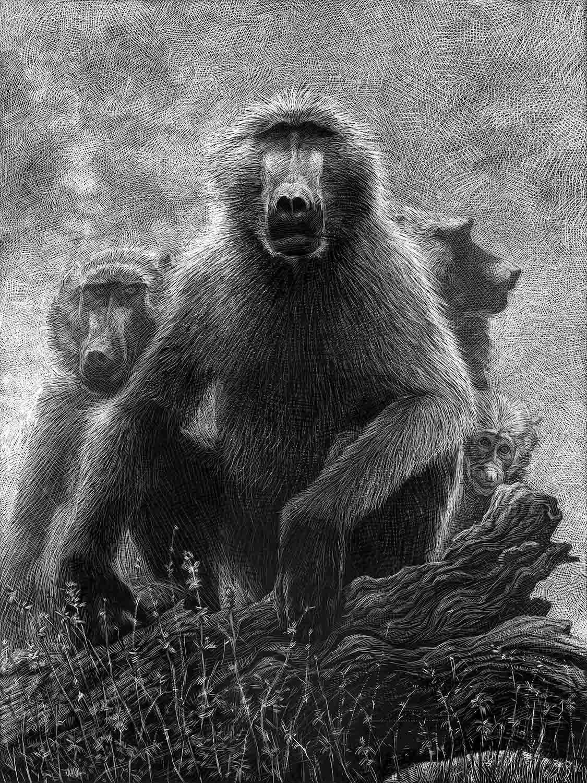 El Animal Ilustrado 11
